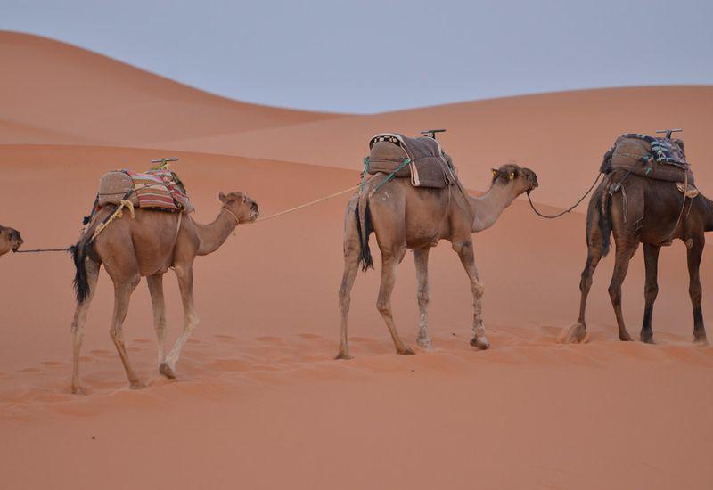 3 días Marrakech viaje al desierto